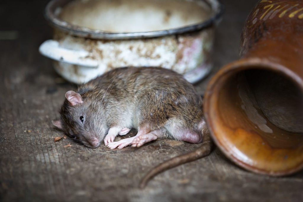 Control de plagas en el hogar y negocios en Barcelona para evitar la propagación de alimañas